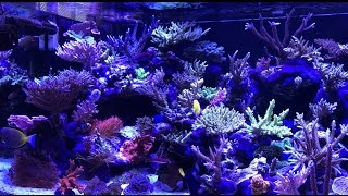channel appetizers   ep 1   ricos 650 gallon sps reef tank