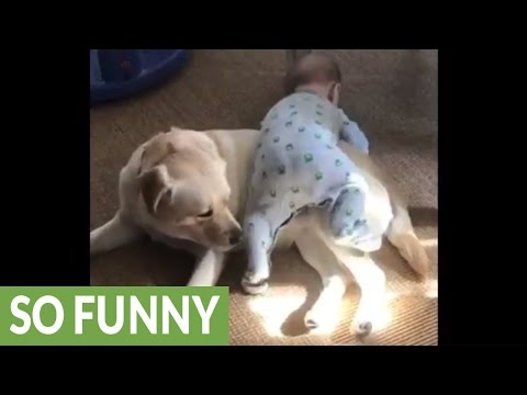 Baby uses dog as personal jungle gym