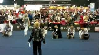 World Dog Show 2012 /wds2012/ Yorkshire Terrier Male Open Class