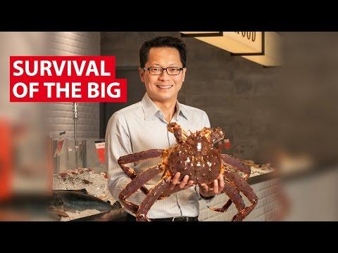 Survival Of The Big | Money Mind | CNA Insider