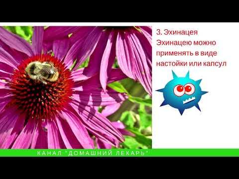 Народные средства для лечения хламидиоза - Домашний лекарь - выпуск №13