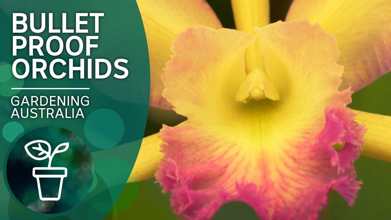 Top tips for orchid success   Indoor plants   Gardening Australia
