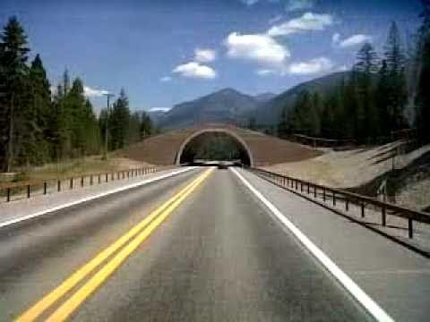 Animal Bridge-Evaro, Montana