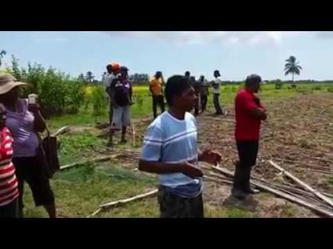 Strathavon Guyana farmer crops destroys by APNU AFC official