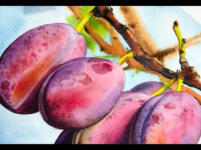 How to paint realistic Plums in Watercolor