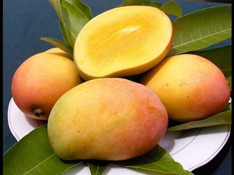 Công dụng của quả xoài và giá trị dinh dưỡng của quả xoài