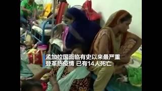 孟加拉国面临有史以来最严重登革热疫情