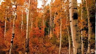 [홈페이지] 가을