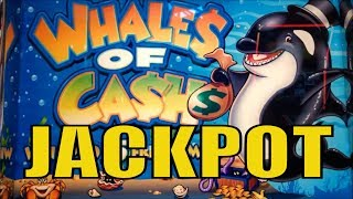 ★JACKPOT ! Whales of Cash Slot★Lovely Old Aristocrat☆Black Panther/Seal the Deal/Wild Stallion☆