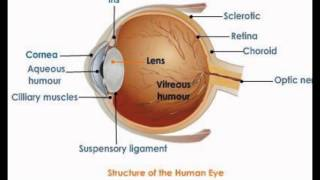 The Human Eye Structure