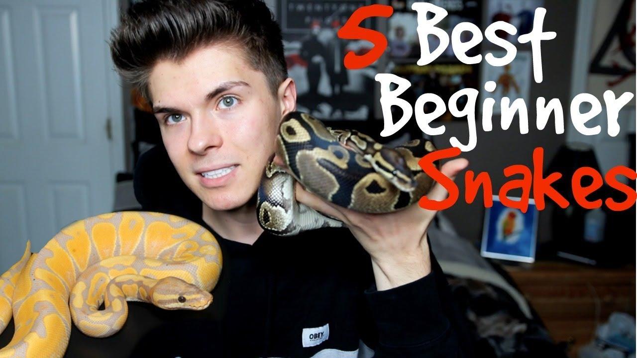 5-best-pet-snakes-for-beginners