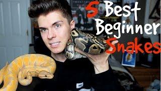 5 Best Pet Snakes for Beginners!