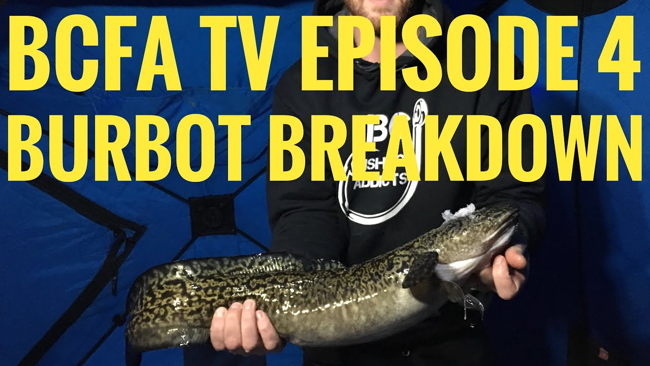 how to catch burbot in bc