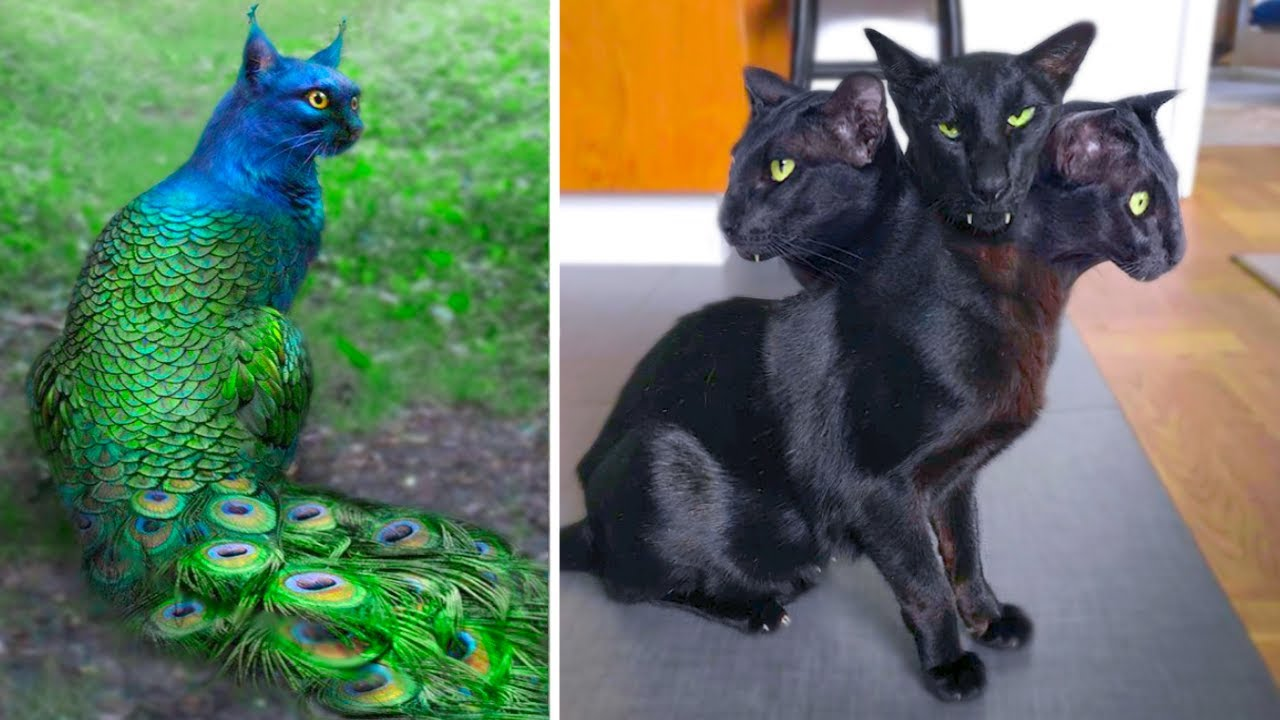 Download 15 Abnormally Strange Cats That Actually Exist