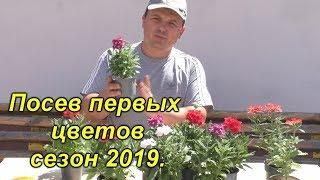 Сезон 2019. Посев первых цветов.