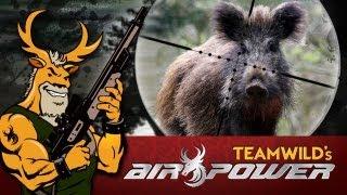 Extreme Airgun Hunt: Feral Hogs with Benjamin Rogue .357 Big Bore Airgun