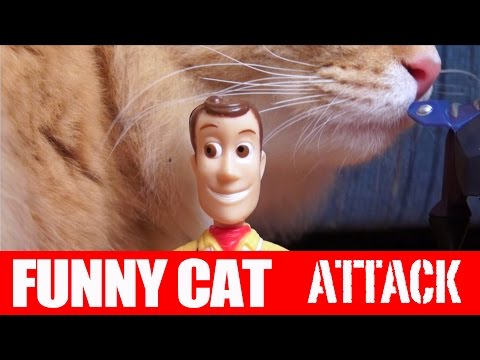 Awesome Cat Attack! TOY STORY 4! Batman Toys, Superman, Hulk, Avengers, STAR WARS, Toy Story Toys