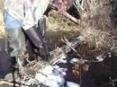 Muskrat trapping in New Brunswick  4