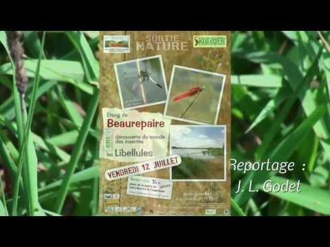 entre Deux Sèvres et Maine et Loire, l'étang de Beaurepaire