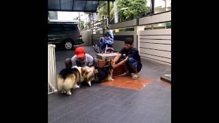 Anjing Kawin Part 2