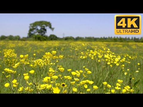 Relaxing Nature Video in Countryside - 4K TV Screensaver