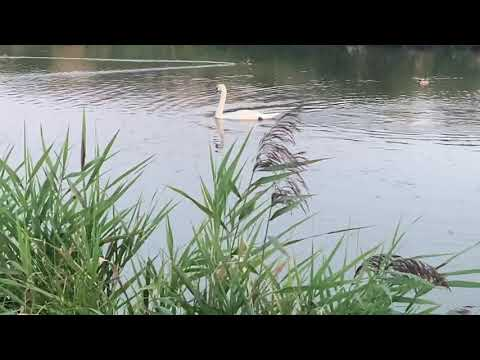 Birds And Fish Of Canvey Island Lake