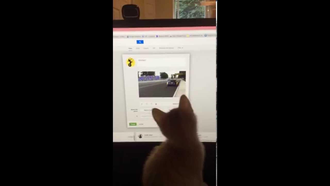 Un chaton qui joue avec un gif animé