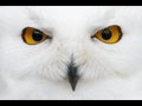 Download Monitoring Spirits, Evil Eye, Magic Mirror and Evil Police