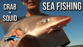 Sea Fishing with Squid and Crab bait | TAFishing