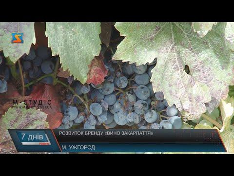 Розвиток бренду «Вино Закарпаття»