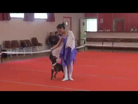 Concours HTM dog dancing Villedieu sur indre 14.04.18