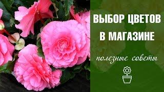 Как выбрать цветы в магазине? 10 советов за 5 минут(Сад и огород с ХитсадТВ #СадиогородВсе выпуски