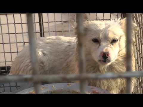 ✦DOG & CAT FUR USED FOR TOYS,BAGS AND CLOTHES IN CHINA✦