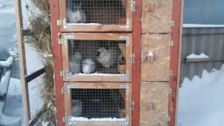 видео Клетки для кроликов своими руками: как сделать одноярусные и многоярусные домики