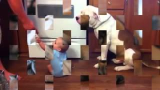 Funny Compilation Animal Video 2014 Bulldog Licking Baby
