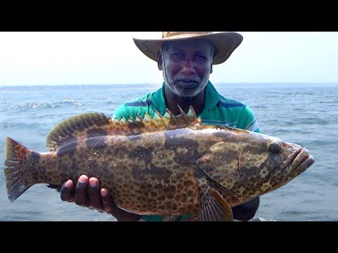 Catch Some GOLIATH GROUPER / TRIGGERFiSH - Offshore Fishing
