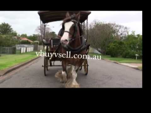 Juliet's Song In Morpeth Hunter Valley