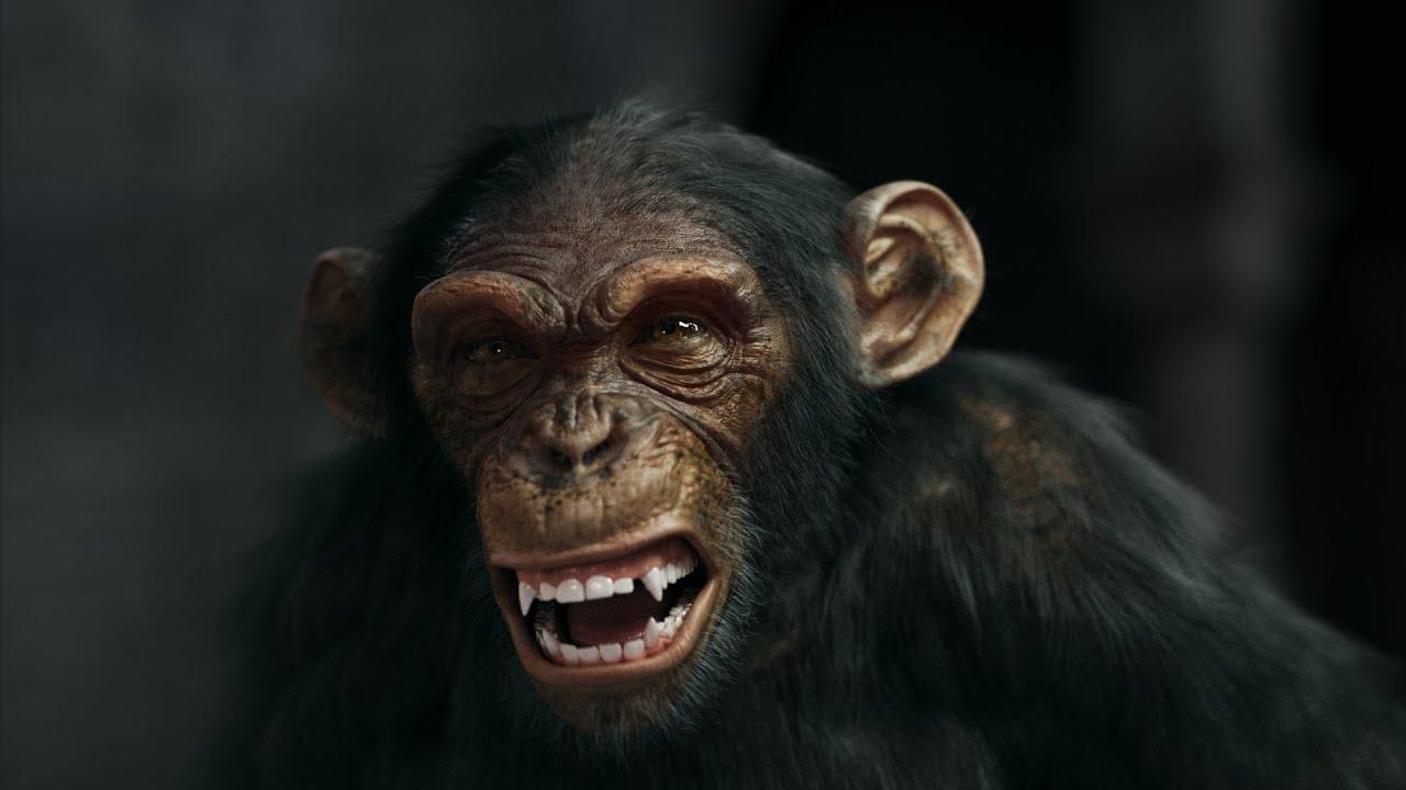 3 Apes