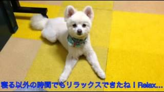 神戸のケージレス・ペットホテル、ペットシッターかわい】 http://amebl...