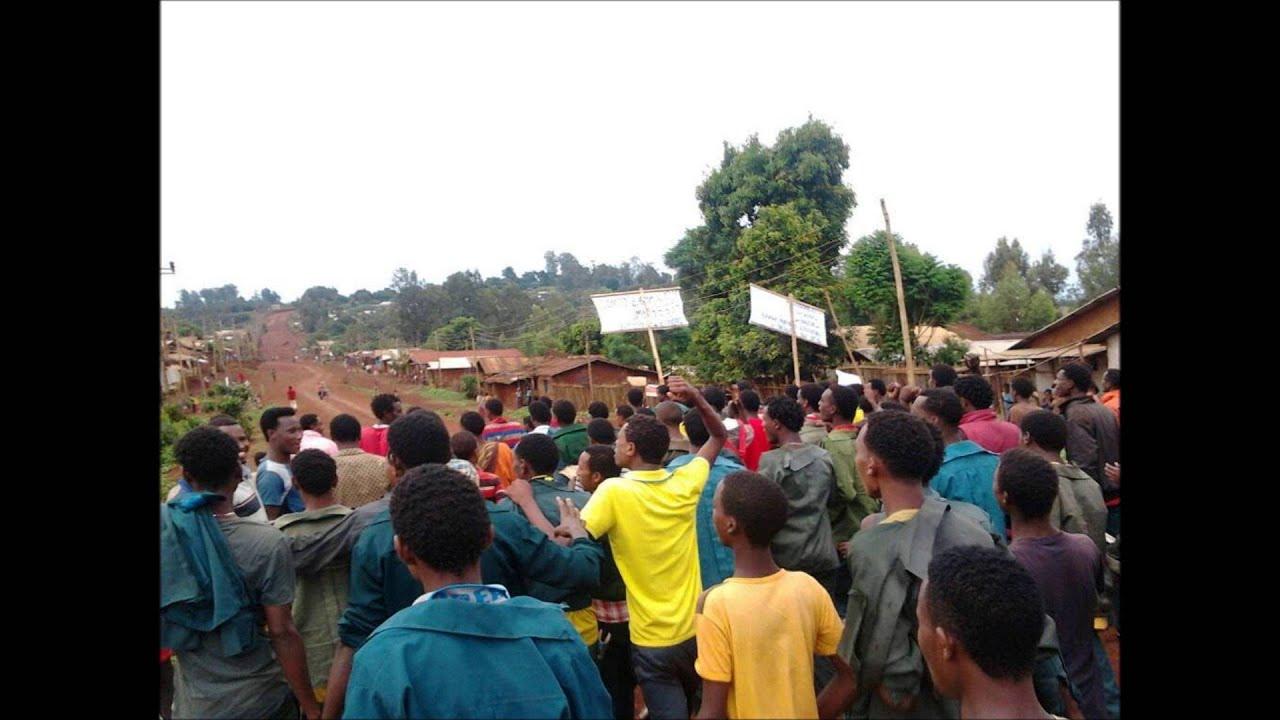 Download Gaaffii Mirgaa Barattoota Oromoo Gullisoo