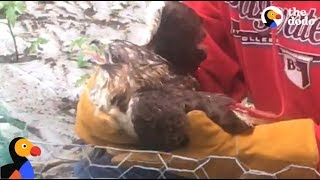 LUCKY Hawk Stuck In Net Rescued by Sweet Guys