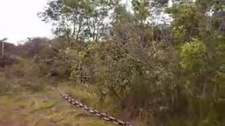 Clearing Bush With Chains
