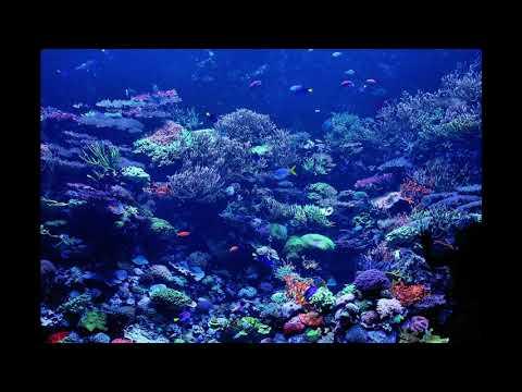 DEEP OCEAN SEA SOUND - Sleep Relax Meditate  Deep coral reef area 8 hours