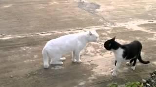 Вот это воин!(http://bit.ly/PjRjsy - накорми кота чтобы не дрался! Два кота Сегодня в ссоре — Когти точат на заборе. Дыбом шерст..., 2012-09-12T09:24:49.000Z)