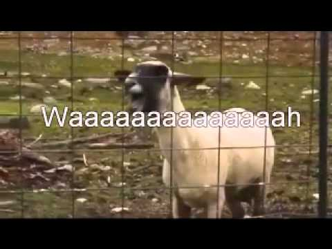 Screaming Goat karaoke