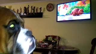 Собака смотрит телевизор