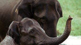 Idukki Tourism Attractions- Thekkady, Munnar, Ramakalmedu, Vagamon, Rajamala, Anamudi