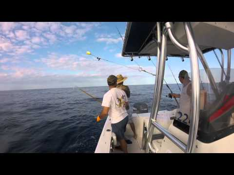 dolphin fishing stuart florida