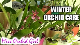 Orchid care in the autumn and winter time