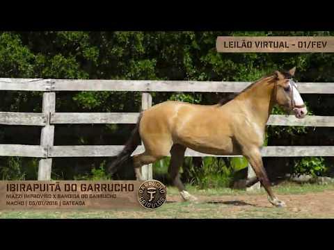 Lote 29 - Ibirapuitã do Garrucho